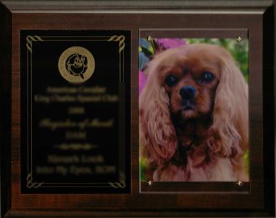 Additional Award Plaque